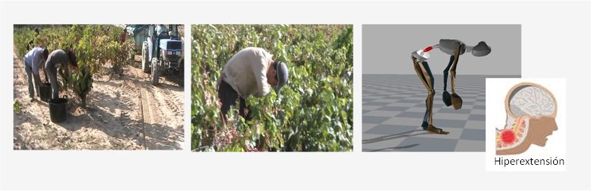 Corte uva en vaso INCORRECTO
