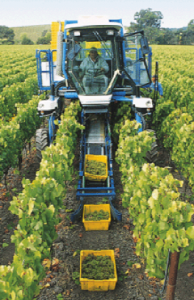 Maquina recoge cajas viñedo