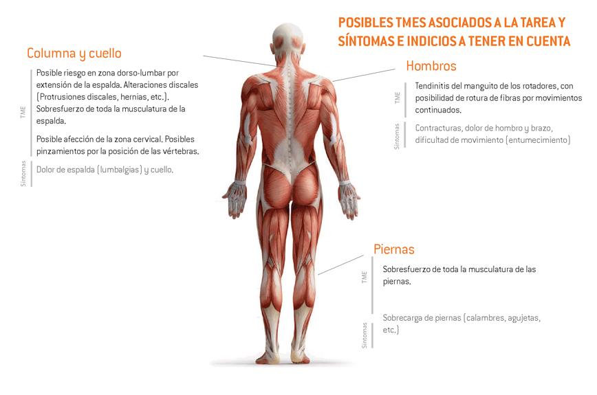 09-sintomas_TME_vendimia_corte uva_parra