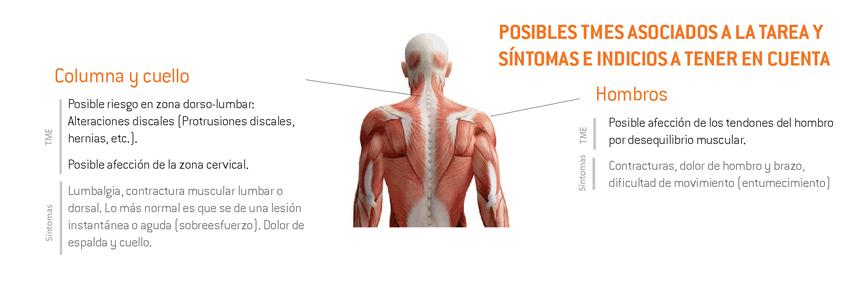 10-sintomas_TME_vendimia_cesto_y cajas durante corte