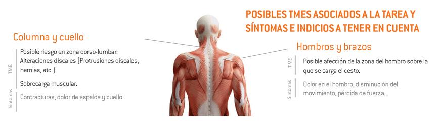 14-sintomas_TME_vendimia_traslado_cesto